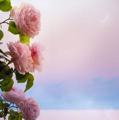 art flowers roses romantic evening on Park Lake