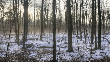 Fog moves through the background of this timelapse of a forest