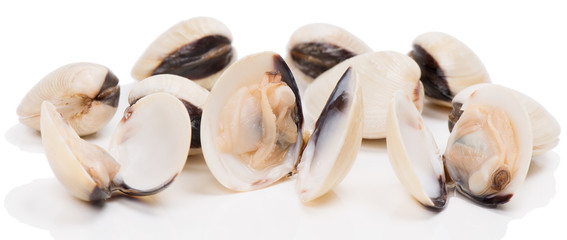 uncooked clams