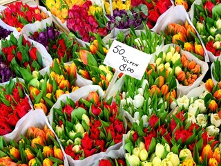 Tulip flowers for sale at a Dutch flower market