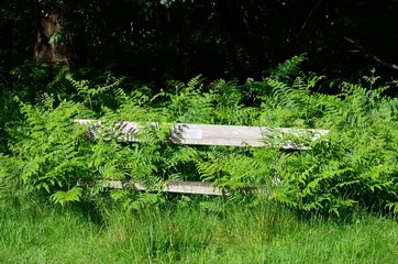 Abandoned forest bench