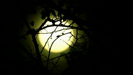 Sunrise   of yellow mystical sun  in wood.   time lapse clip