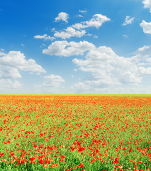 red poppies field and blue cloudy sky