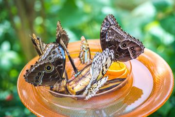 Schmetterlinge, Insel Mainau Schmetterlingshaus