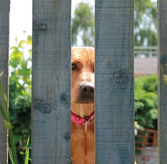 imprisoned dog