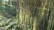 Panorama of larch tree twig hang in autumn park and sun beams