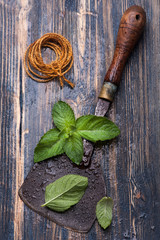Fresh mint and vintage chopper knife on wooden background