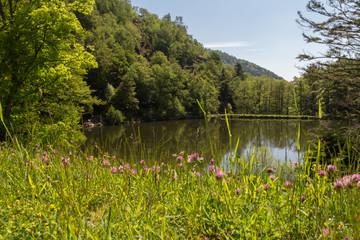 Lac et fleurs en montagne