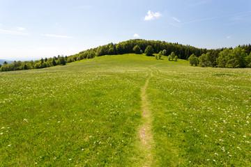 Chemin dans l''herbe