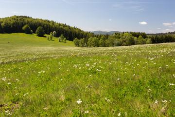 Herbe et pré fleuri en montagne
