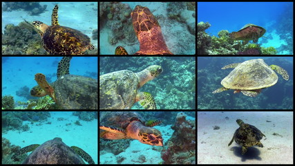Video Wall Turtle Swimming over Coral Reef, 9 screens static