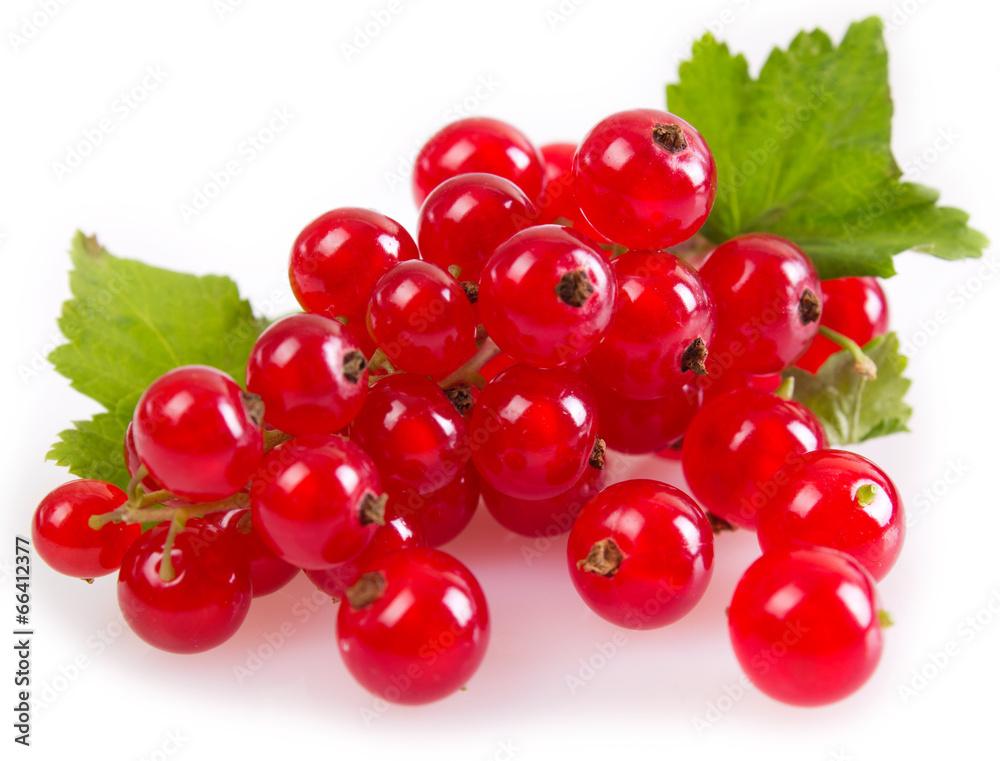 czerwony jagoda czerwona porzeczka - powiększenie