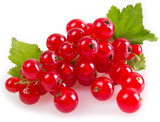Fototapety Red currant