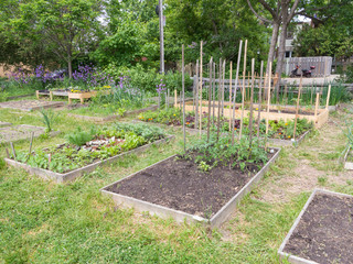 Community Garden early in season