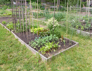 Community Garden in early summer