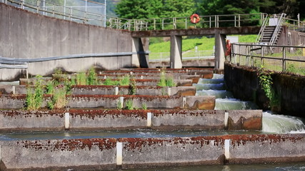 Fish Ladder Sequence