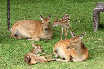 子鹿と母鹿