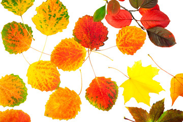 colored autumn leaves isolated on a white background