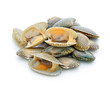 Leinwanddruck Bild - shellfish