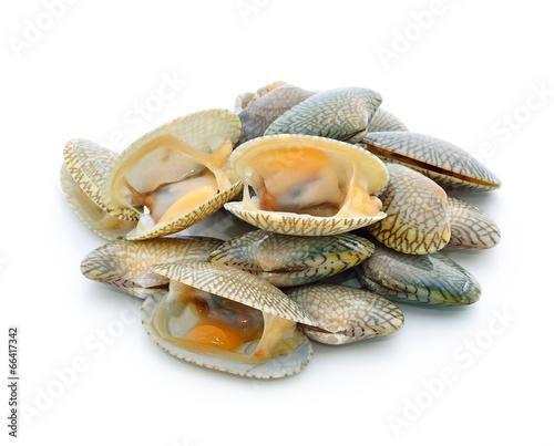 Leinwanddruck Bild shellfish
