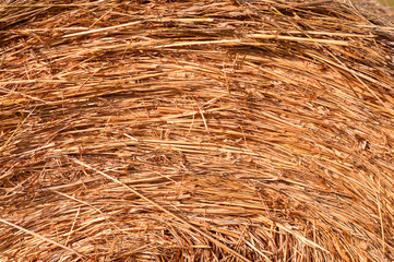 Hay bale background