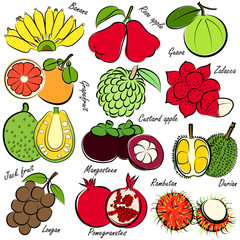 illustration of thai fruits set , hand drawn vector