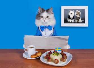 cat businessman lunch Swedish meatballs