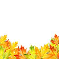 Autumn maple leaves on a white background