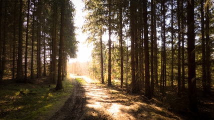 Waldweg im Sonnenuntergang