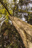 Trees in the botanic garden - enhanced colors poster