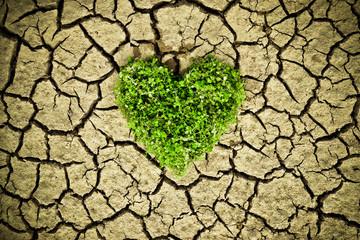 tree arranged as a heart shape on cracked earth