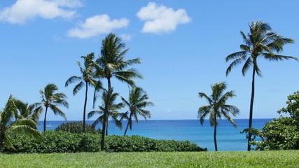 常夏の景色 ヤシの木と青空と海