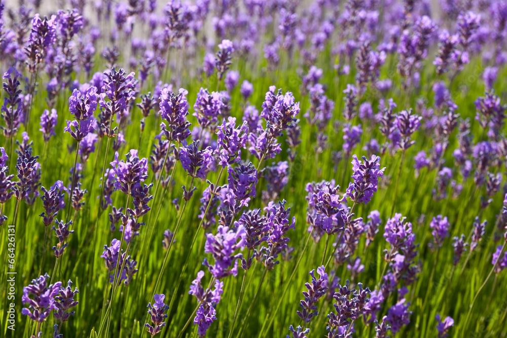 roślina kwiat kwiat - powiększenie
