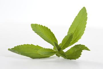 STÉVIA - Plante médicinale