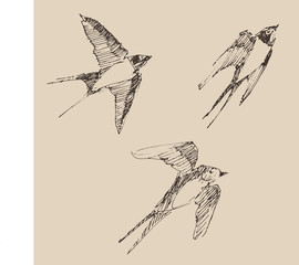 swallows flying bird set  illustration, engraved style