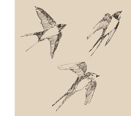 swallows flying bird set  illustration, engraved style