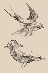 Bird set  vintage illustration, engraved retro style