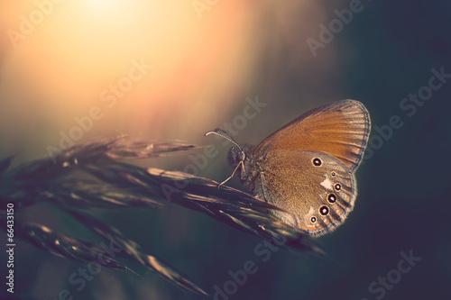 Foto op Aluminium Vlinder Butterfly