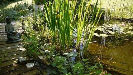 Gartenteich Teich Seerosen