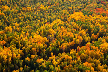 Forest in autumn, top view