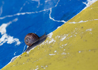 Just Follow The Line, Snail!