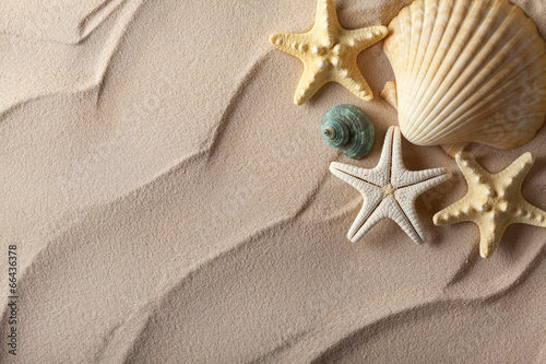 canvas print picture Summer background - shells on sand