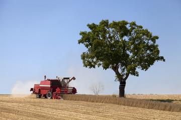 Baum 18 B