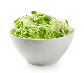 green young sunflower sprouts in the white bowl  isolated on whi