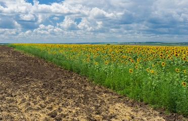 Rural landscape in summer season in central Ukraine