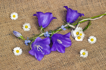 Blue bells and daisies