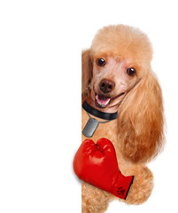 dog with big red gloves