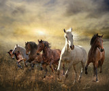 Fototapety herd of horses galloping free at sunset