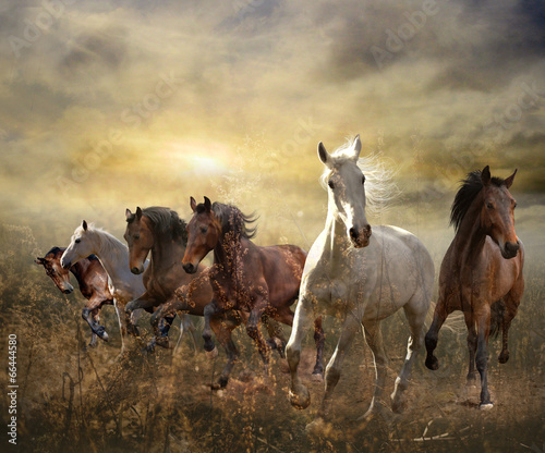 herd of horses galloping free at sunset - 66444580