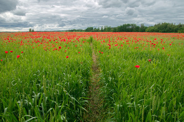 path in poppy